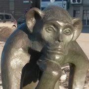 Closeup. Monkey