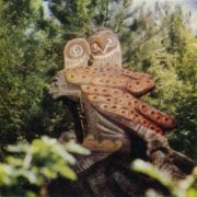 Forest wirch with owls