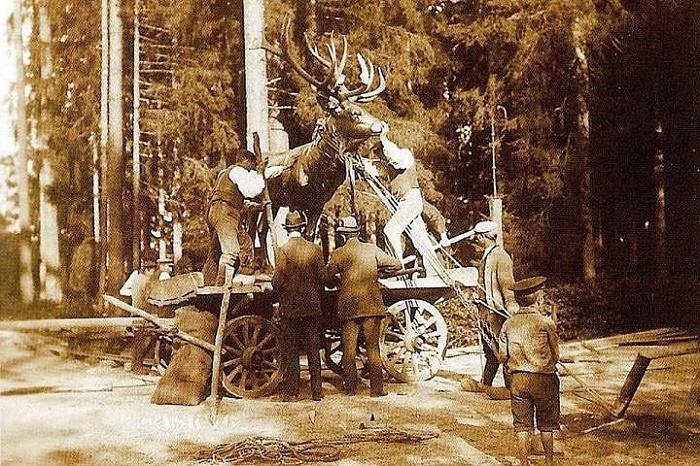 Transporting the deer
