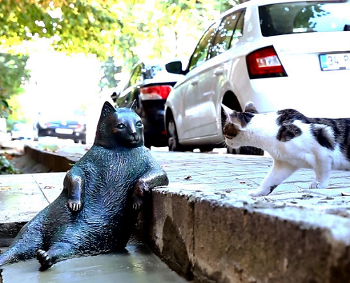A cat is surprised to see the cat monument. Stories behind Cats monuments