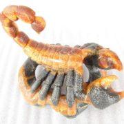 Sculpture of scorpio. Material - Simbirtsit