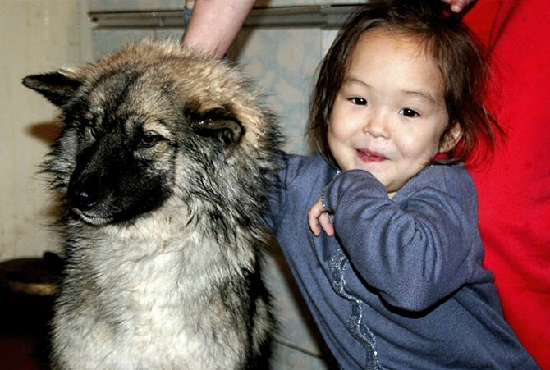 4-year-old Karina Chikitova from the village of Olek of the Olekminsky district, who was lost, and spent 11 days in the Yakut taiga