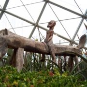The wooden sculpture is a part of beautiful design of the Flower Dome