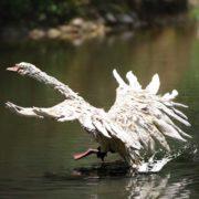 A Royal take-off