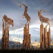 Goats driftwood sculpture